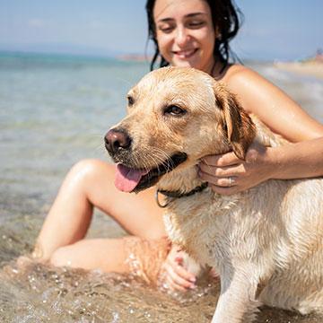 Is Hillsboro Beach Resort pet-friendly?